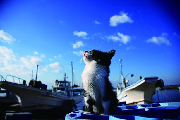 すがすがしい青空を見上げる。穏やかな日常の風景にほっこり