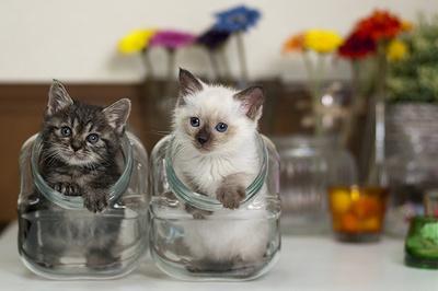 【写真を見る】仲良く瓶の中に入るネコたち。つぶらな瞳がたまらない