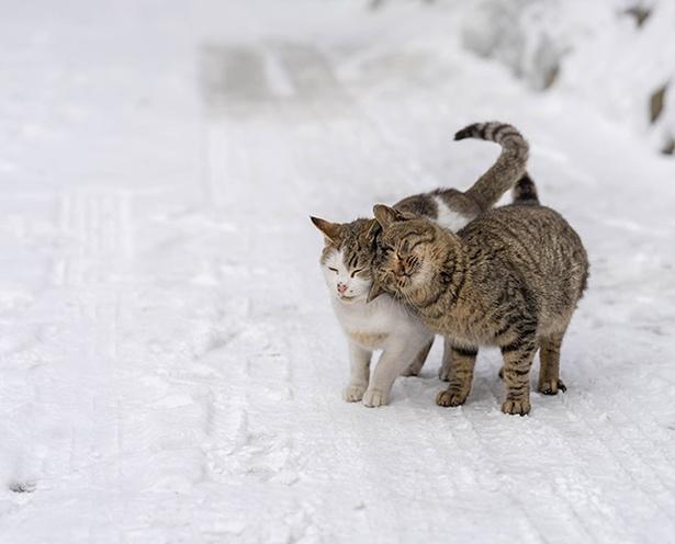雪道でスリスリ。気持よくて「ごろごろ」と喉が鳴ってそう