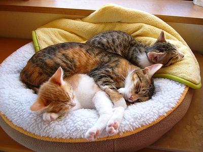 3匹仲良くお昼寝中。どんな夢を見てるのかな?