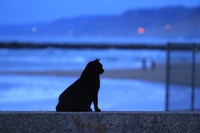 海岸の防波堤で佇むネコ。風景の青さと逆光になったネコとのコントラストが美しい