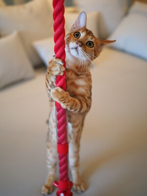 鈴緒のような紐を持って願い事をしているのかな?