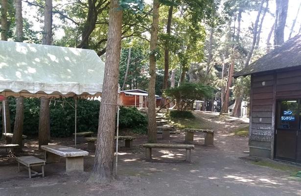 緑豊かな森林の中にあるキャンプ場。約250張りのテントが設置可能