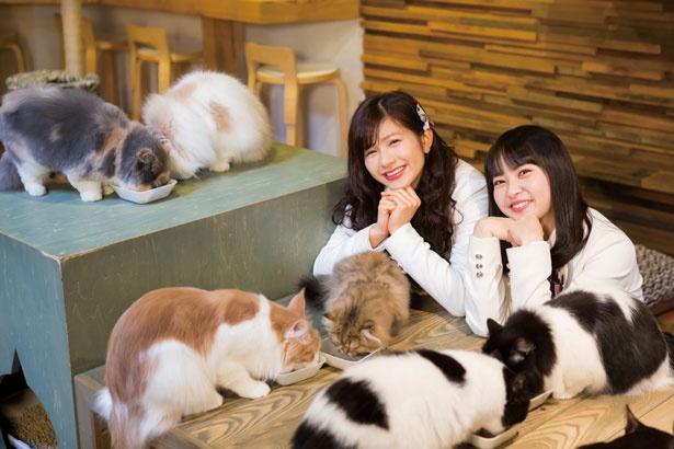 猫たちがごはんを食べるのを見守る2人/Cat Of Liberty