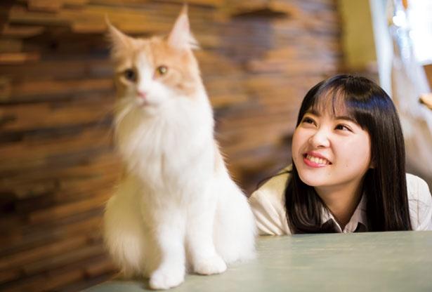 メインクーンの紬ちゃん/Cat Of Liberty