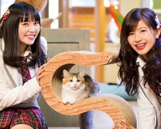 モフモフかわいい猫と一緒/Cat Of Liberty
