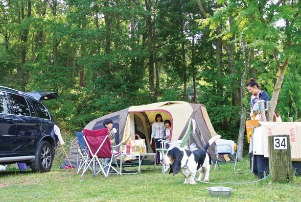 施設内で唯一ペットと一緒に宿泊できるペットサイト/グリム冒険の森
