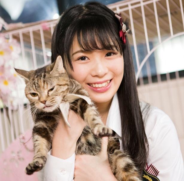【写真を見る】ももねの推しニャン「こまちちゃん(マンチカン)」/保護猫カフェ ねこじま