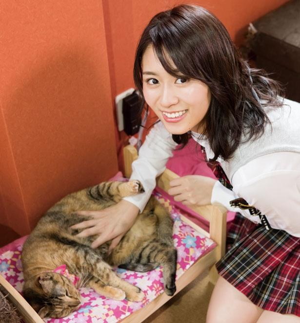 おなかを触られるのが好きな猫ちゃんも。/保護猫カフェ ねこじま