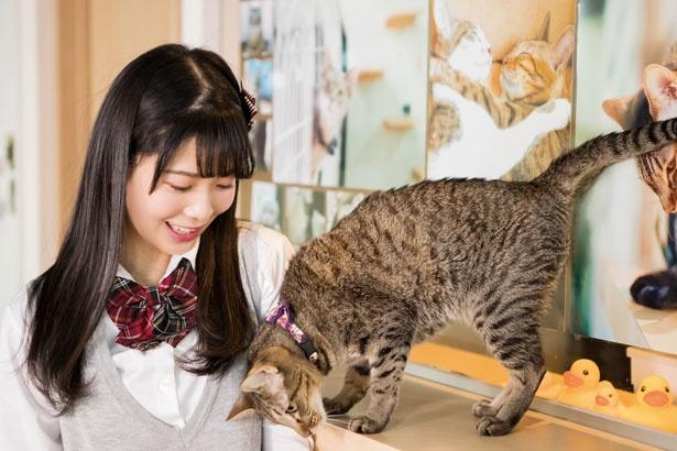 近くに行くとスリスリしてくれる、ひめちゃん/保護猫カフェ ねこじま
