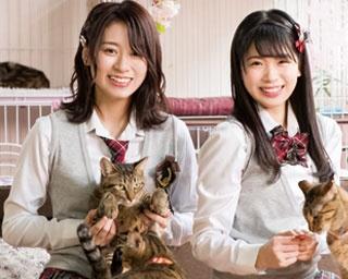 モフモフかわいい猫と一緒/保護猫カフェ ねこじま
