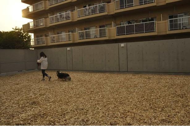 ホテル横のドッグラン。ヒノキのウッドチップが敷き詰められ、愛犬の足にも優しい。そのほか足洗い場や愛犬用カートなどもある