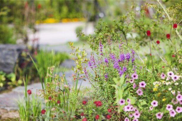 色とりどりの花たち