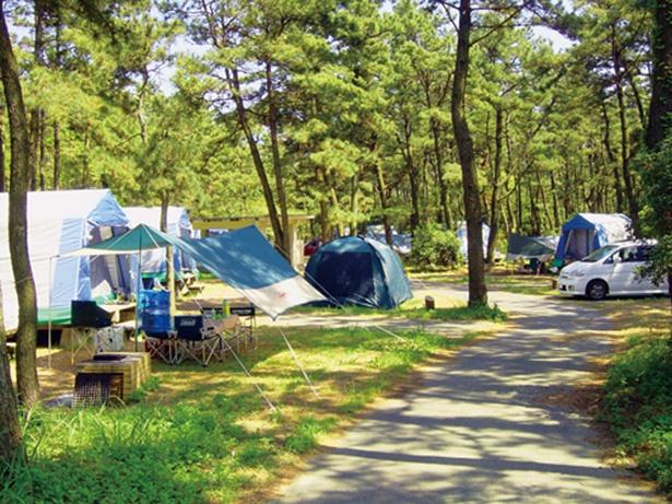 キャンプ場はすべて、自由に車の乗り入れができるオートサイト