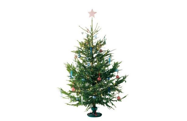 高さ100〜120�の本物のモミの木のクリスマスツリーは1990円