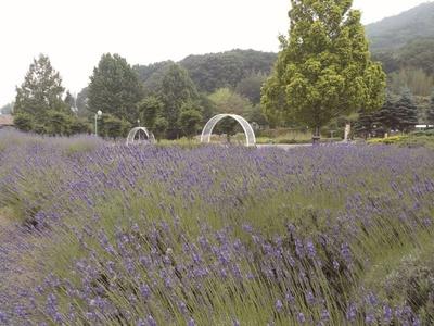 6月にはハーブを使った体験講座や園内のガイドウォ ークなどが実施される