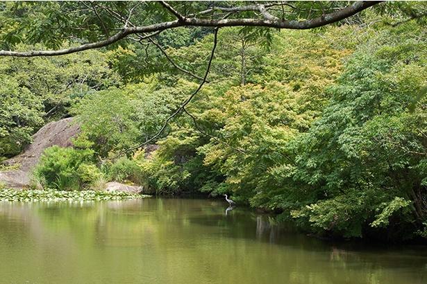 水面に映る新緑の紅葉にも注目!