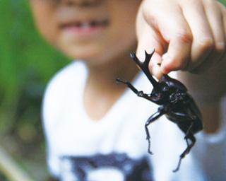 宿泊者限定の昆虫採集ツアーは当日申込み。網は貸し出してくれるが、虫かごと一緒に持参してもOKだ