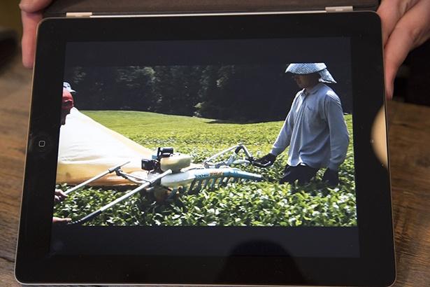 普段は見られない収穫の流れなども映像で楽しむことができる