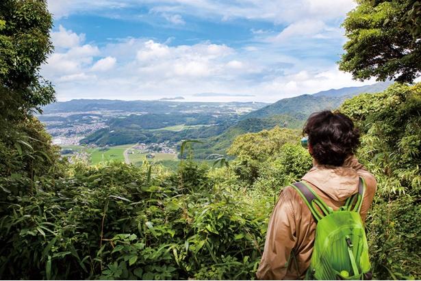 城山 / 登山口から約200m続く急勾配の丸太の階段や、木漏れ陽が気持ちいいスギ林を抜けゴールを目指そう