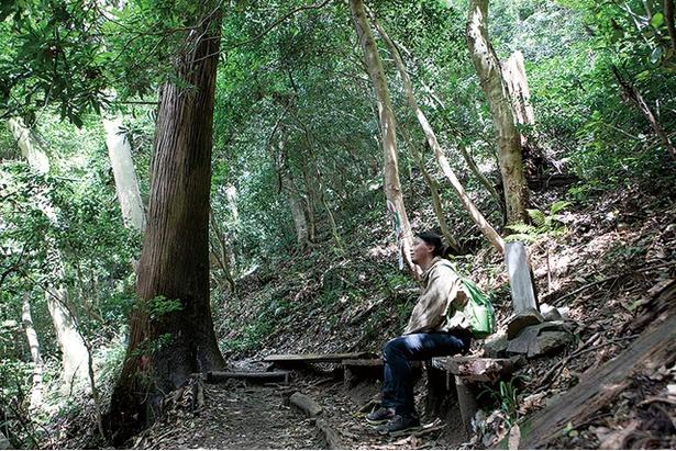 城山 / 樹齢数百年の巨木脇にベンチがあり、ここが中間地点