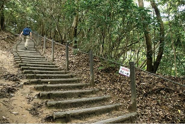天拝山 / 8合目から頂上まで続く階段は全436段。勾配が緩やかで登りやすい
