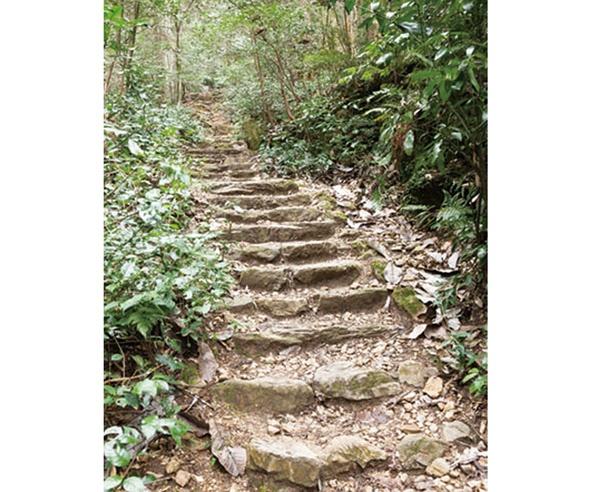階段は踏み場が狭く、落ち葉で滑りやすいため注意して歩こう!