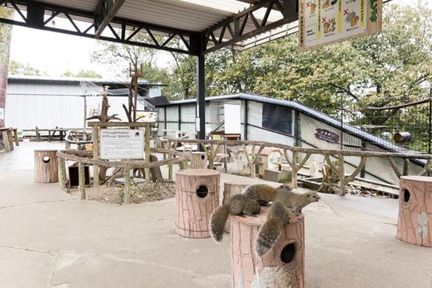「金華山 リス村」では、人懐っこく、かわいいタイワンリスにエサやりができる(入場料200円)