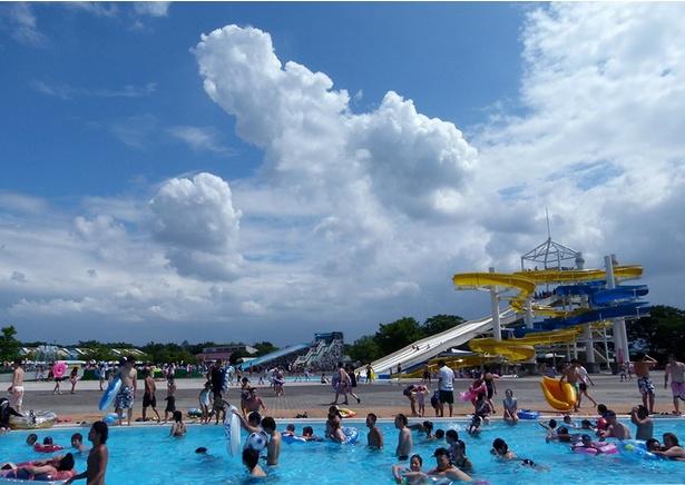 さまざまな種類のプールがあり、楽しみ方もたくさん
