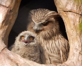 旭山動物園/ニホンザルの赤ちゃんと母