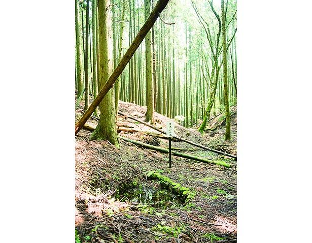 中川清秀の墓から徒歩約10分の首洗いの池。ここから猿ヶ馬場までは15分ほど