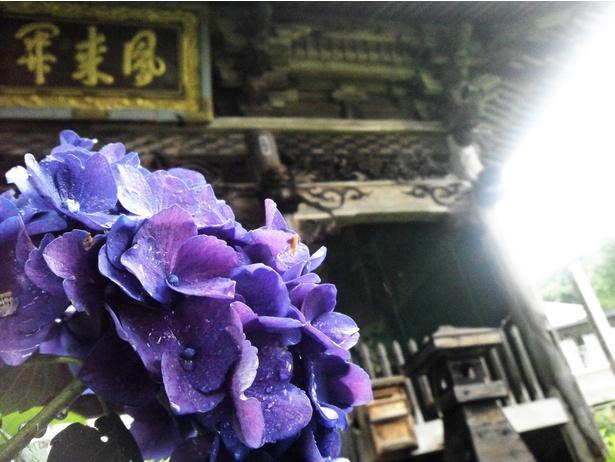 別名「あじさい寺」として親しまれている曹洞宗三嶋山高源院