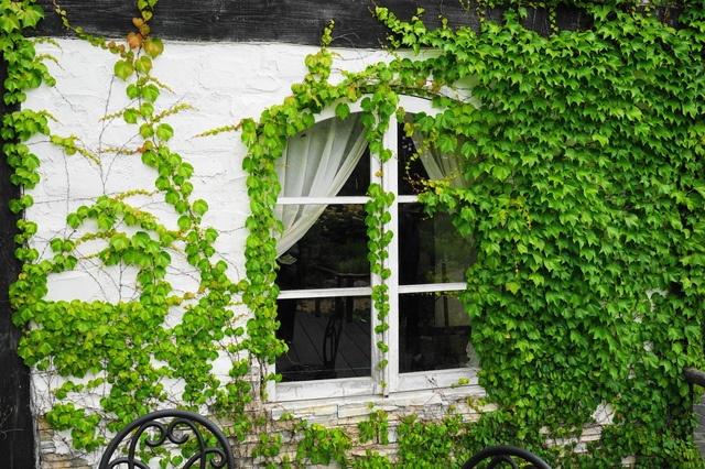 「緑のカーテン」で涼しい夏に