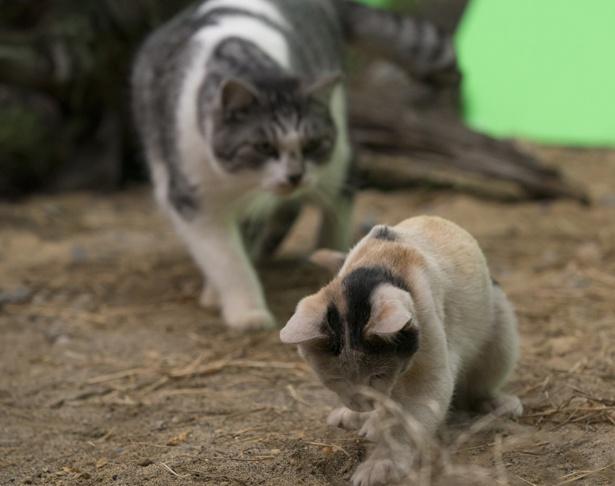 映画には総勢11匹のキュートな猫ちゃんたちが登場!
