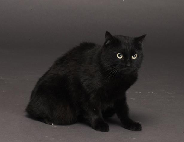 ミステリアスでいつも冷静な黒猫