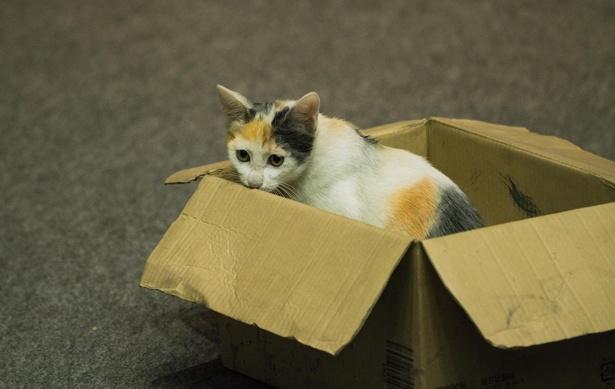 ヤンチャで元気いっぱいの三毛猫キイロ。人間パートを演じるのはコムアイ