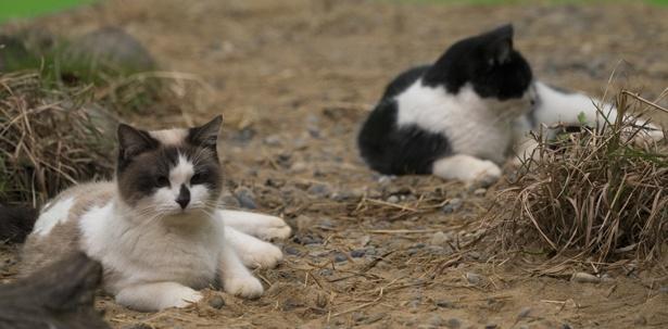 ねこすて橋では、野良や捨て猫などが身を寄せあって暮らしている