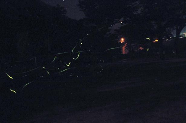 20:00すぎにホタルの乱舞が見られることが多い。周りに街灯がないため、足元に注意して観賞しよう