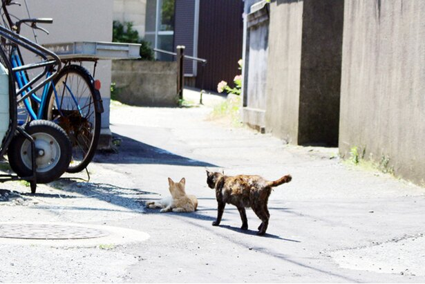 """""""猫島""""に住むニャンコ"""
