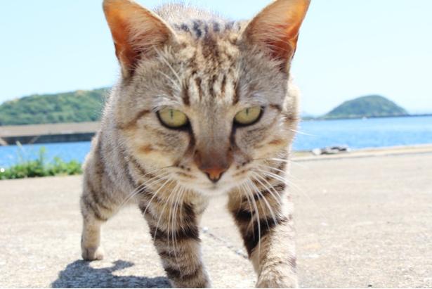 至近距離で挨拶してくれる、フレンドリーな猫