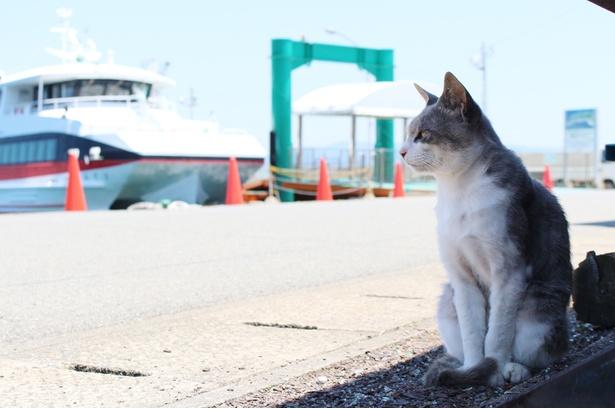 船の往来を眺めながら、物思いにふける猫
