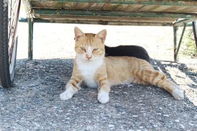 荷車の下で涼み中。暑い日には日陰に集まる猫たち