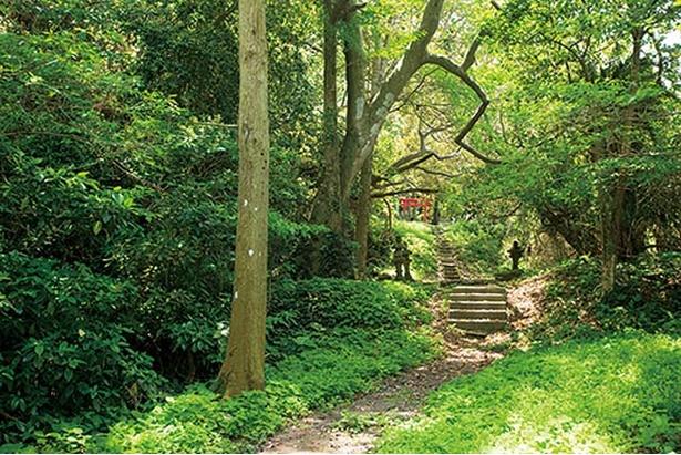 津屋崎の恋人岬 / 比較的、人が少ない穴場の絶景スポット