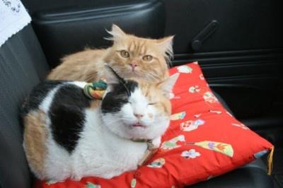 ねこタクシーでも助手席で仲良く休憩
