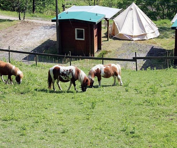 吉原ごんべえ村 / 敷地内にはポニー牧場があり、間近でポニーを見られると子供も大喜び