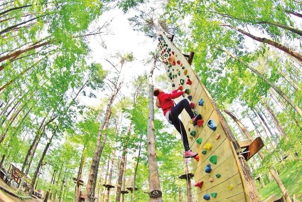 「フォレストアドベンチャー・ 三島スカイウォーク」で楽しめる「クリフチャレンジャー」(1000円/10分)。森の中にある約10mの壁で、クライミング体験ができる