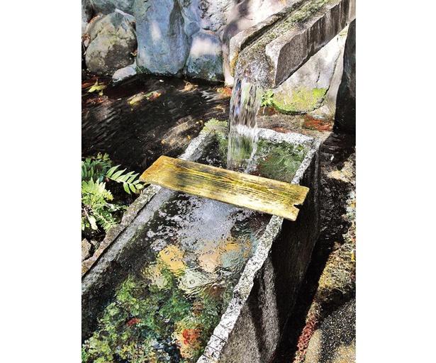 湧き水は自分で採水して、無料で持ち帰ることもできる。空のペットボトル(60円)の販売もある