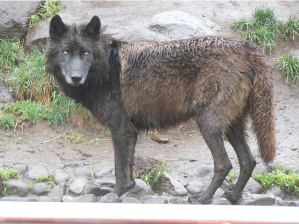 ポイントは5つ! 雨の日の旭山動物園を楽しむ方法、教えます