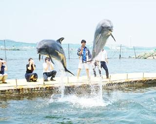 「ミール」と「フラン」、2頭のイルカが元気いっぱいに泳ぐ! /日間賀島ドルフィンビーチ