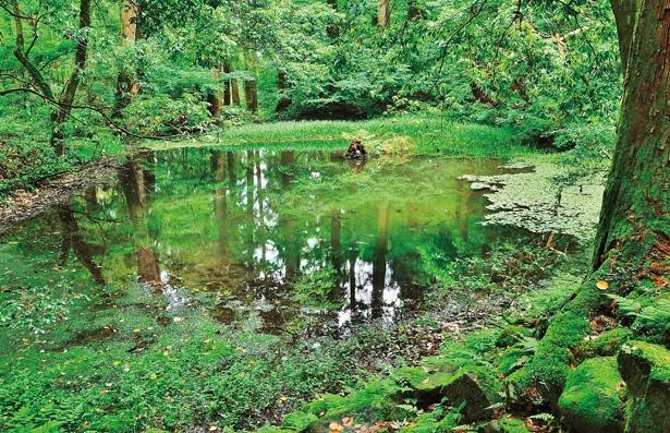 御手洗の池(平泉)。白山を開山した泰澄がココを訪れた時に、白山の神が現れたという伝説が残る